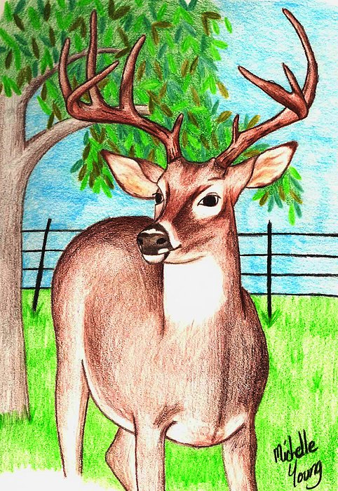 Nature Drawing - Backyard Visitor by Michelle Young