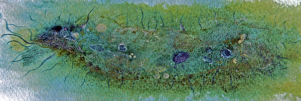 Bacteria Painting - Bacterium I by Kathryn Elliget