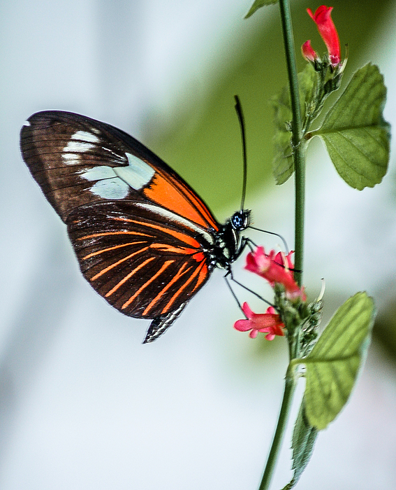 Butterfly Photograph - Balancing Act by Andrea  OConnell