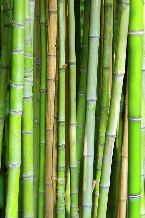 Asian Photograph - Bamboo Background by Carlos Caetano