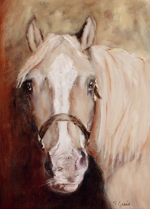 Horse Painting - Banjo by Shirley Quaid