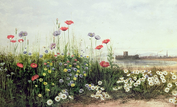 Andrew Painting - Bank Of Summer Flowers by Andrew Nicholl