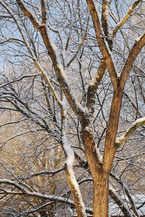 Tree Branch Photograph - Bare Branches by Trudi Southerland