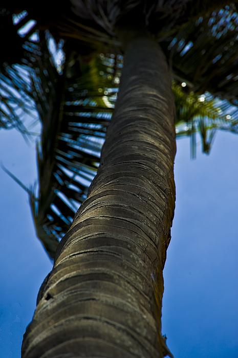 Coconut Tree Photograph - Barking Up The Wrong Tree by Sarita Rampersad