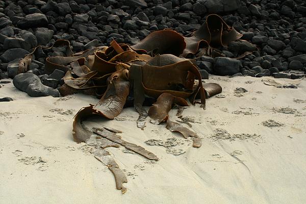 Beach Photograph - Basalt And Kelp by Terry Perham