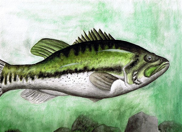 Fish Painting - Bassy by Brandon Sharp