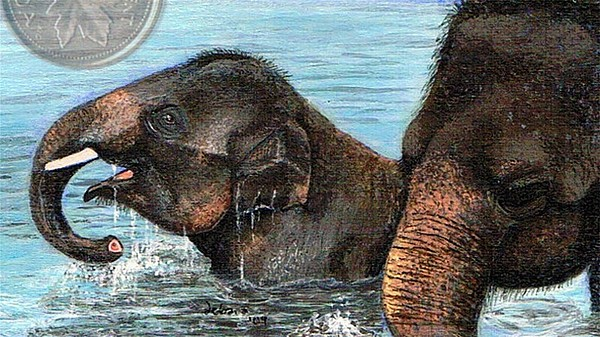 Elephant Painting - Bath Time For Baby by Debara Power