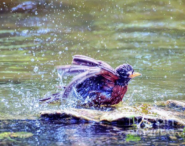 Robin Photograph - Bathing Beauty by Kerri Farley