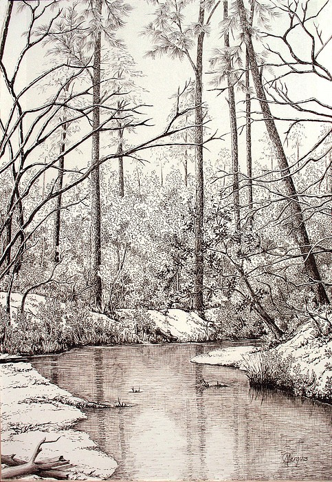 Bayou Drawing - Bayou Lacombe At Peace Grove Ll by Colleen Marquis