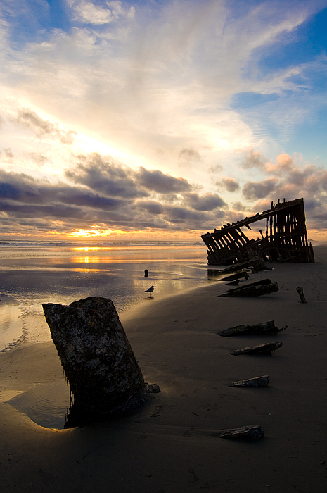 Landscape Photograph - Beach Bones by Jennifer  Owen
