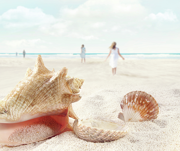 Aquatic Photograph - Beach Scene With People Walking And Seashells by Sandra Cunningham