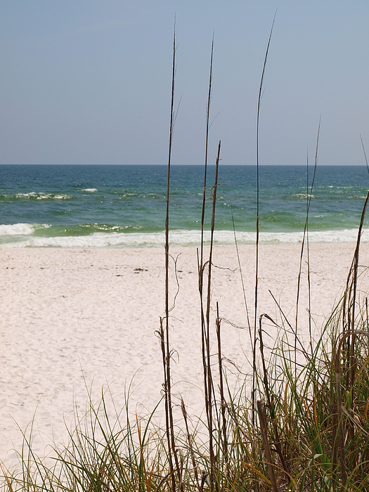 Florida Beach Photo Photograph - Beach View With Grass by James Granberry