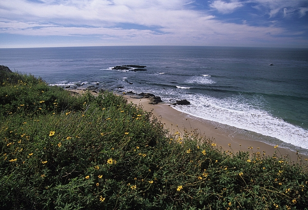 Beach Photograph - Beach Waves And Wildflowers by Don Kreuter