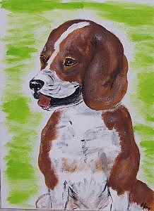Beagle Painting - Beagle by Kathy Young