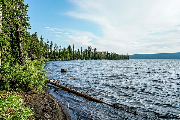 Lake Photograph - Beautiful Shoreline by Ric Schafer
