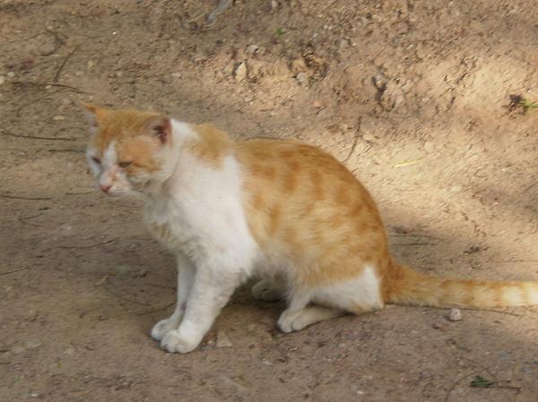 Beautifull Cat Photograph by Munir Ahmad
