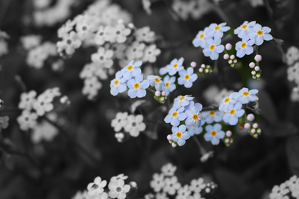 Blue Photograph - Beauty Shines Threw by Thirty Three Photography