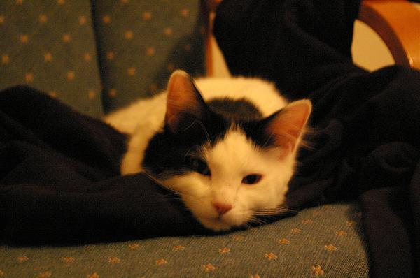 Cats Photograph - Beauty Sleep Needed by Jessica Pettit