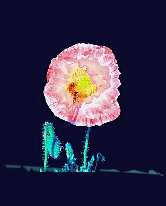 Wall Decor Photograph - Bee Friendly by Myrna Migala