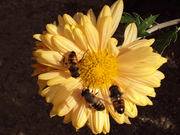 Landscape Photograph - Bees On Feast by David Du Hempsey