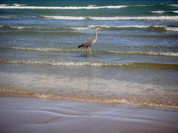 Nature Photograph - Being One With The Gulf - Alert by Lucyna A M Green