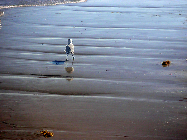 Nature Photograph - Being One With The Gulf - Escaping by Lucyna A M Green