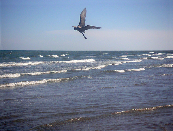 Nature Photograph - Being One With The Gulf - On Wings by Lucyna A M Green