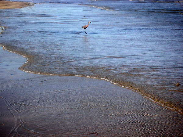 Nature Photograph - Being One With The Gulf - Playing by Lucyna A M Green