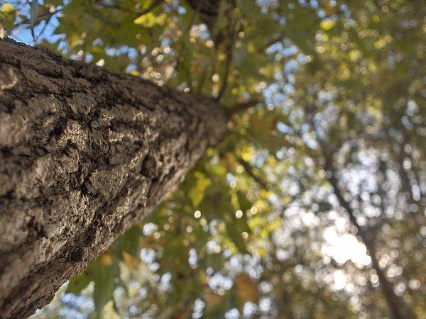Nature Photograph - Bending Tree by Brandy Shelton