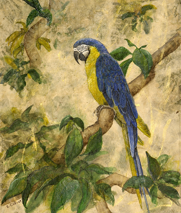 Parrot Painting - Beneath The Canopy by Sandy Clift