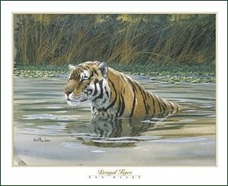 Tiger Print - Bengal Tiger by Don Balke