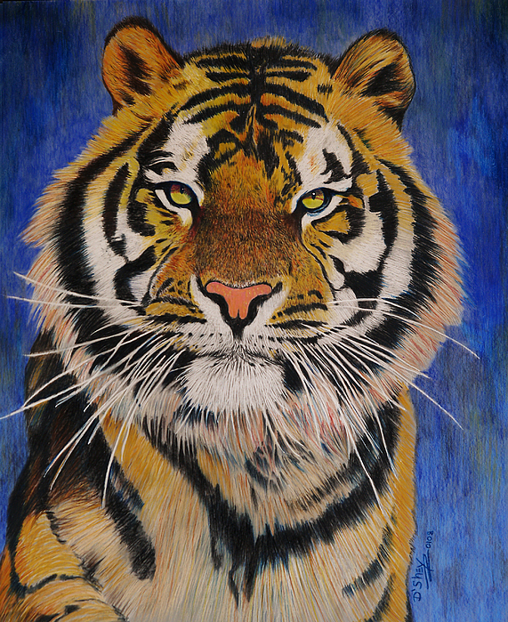 Tiger Painting - Bengal Tiger by Don MacCarthy