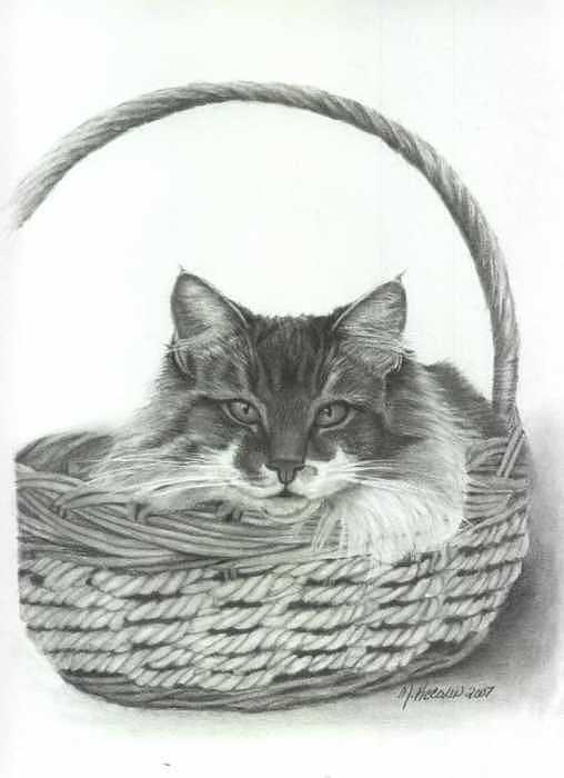 Cat In A Basket Drawing - Benny by Marlene Piccolin
