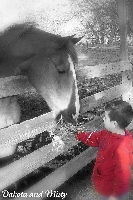 Horse Photograph - Best Friends by Ashley Scheer