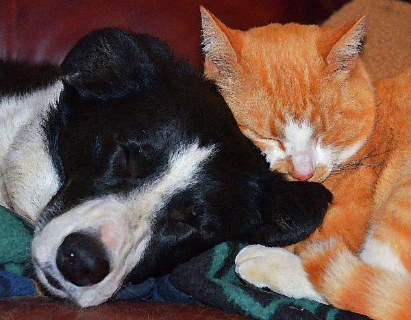 Dogs Photograph - Best Friends by Susie Fisher
