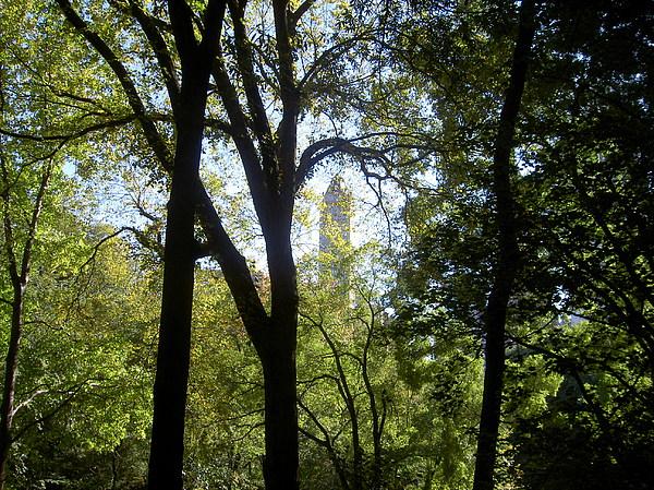 Blima Efraim - Between the Trees