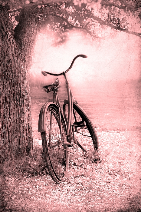 Bicycle Photograph - Bicycle In Pink by Sophie Vigneault