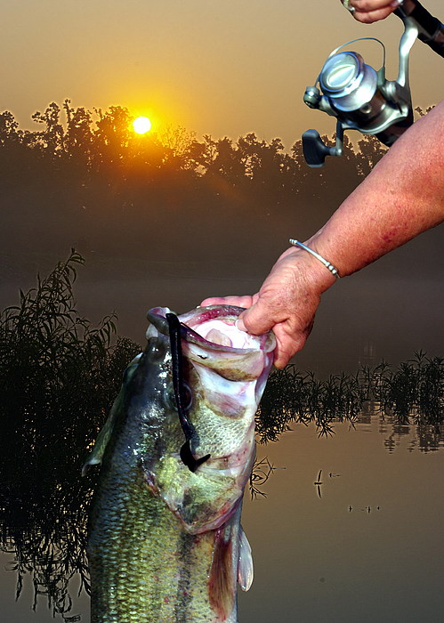 Bass Digital Art - Big Bass At Sunrise by Ron Kruger