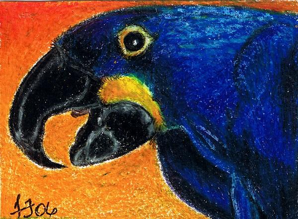 Macaw Painting - Big Blue by Terri Kilpatrick