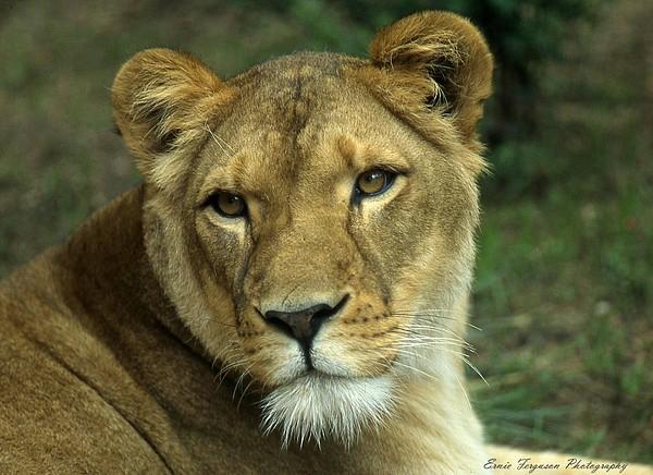 Animals Photograph - Big Momma by Ernie Ferguson