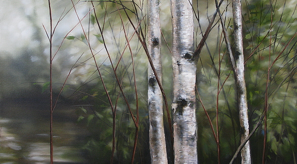 Birch Trees Painting - Birch by Richard Cole