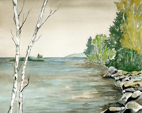 Birches By The Lake Painting by Brenda Owen