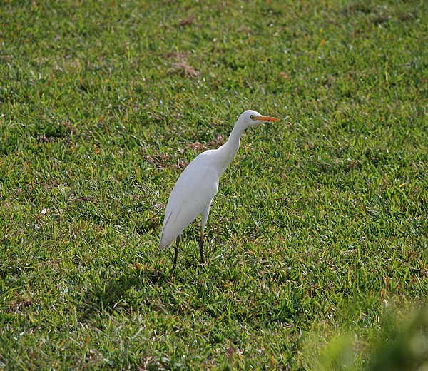 White Bird Photograph - Bird Is The Word by Rob Hans