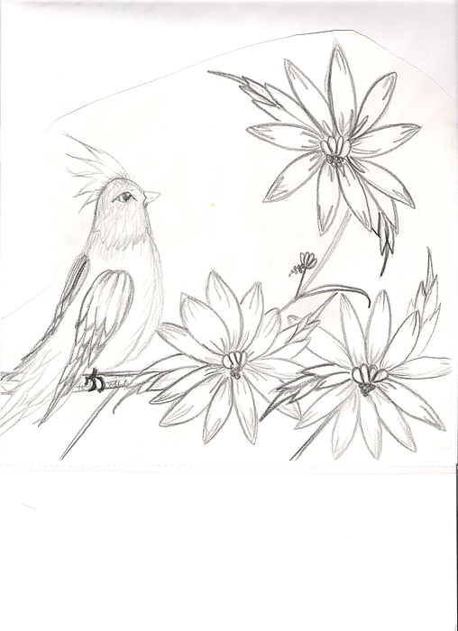 Animals Drawing - Bird On A Branch by Aimee Ley