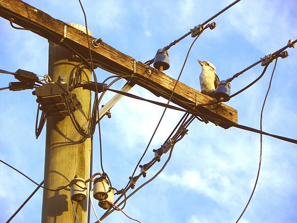 Birds Photograph - Bird On A Wire by Evguenia Men