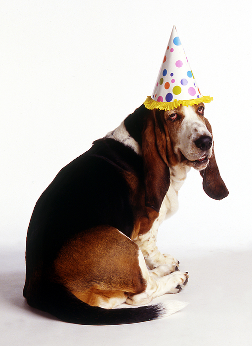 Buy And Sell Apps >> Birthday Basset Hound Greeting Card for Sale by Stan Fellerman
