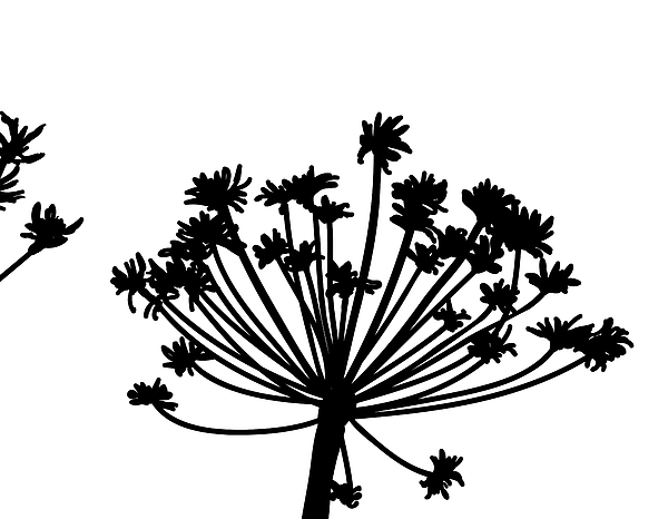 Abstract Digital Art - Black And White Dandelion Part 2 by Nomi Elboim