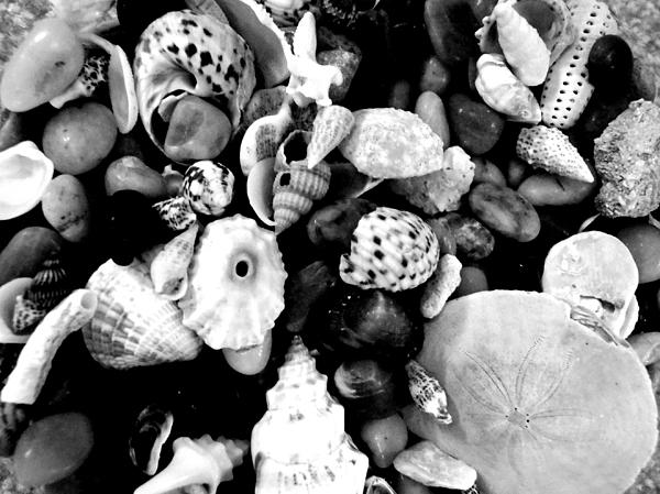 Macro Photograph - Black And White Seashells by Kimberly Perry