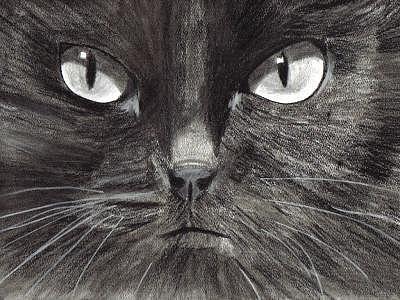 Cat Digital Art - Black Cat Charcoal Drawing by Joshua Hullender
