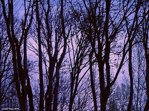 Impressionist Landscape Photograph - Black Lace by Jane Tripp
